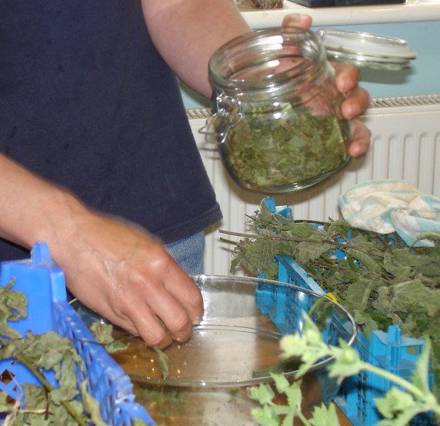 Dried mint packed into glass jar