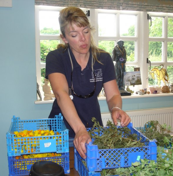 Liz preparing the dried mint