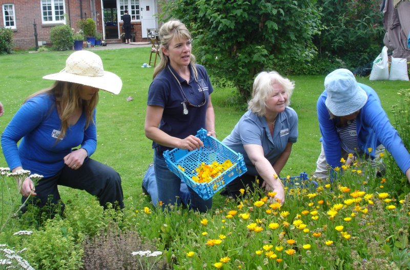 Students foraging marigolds