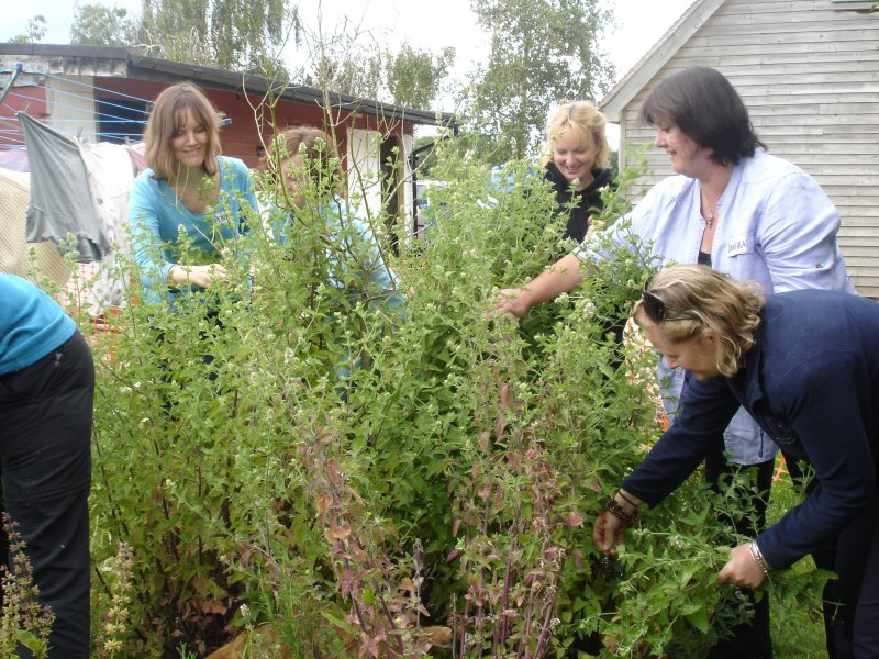 Students picking catnip