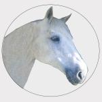 Horse self selection
